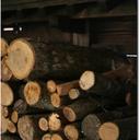 コラム「薪ストーブは地球に優しい」のサムネイル画像
