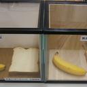 コラム「梅雨時期でもカビ知らず、桐の抗菌作用を実験」のサムネイル画像
