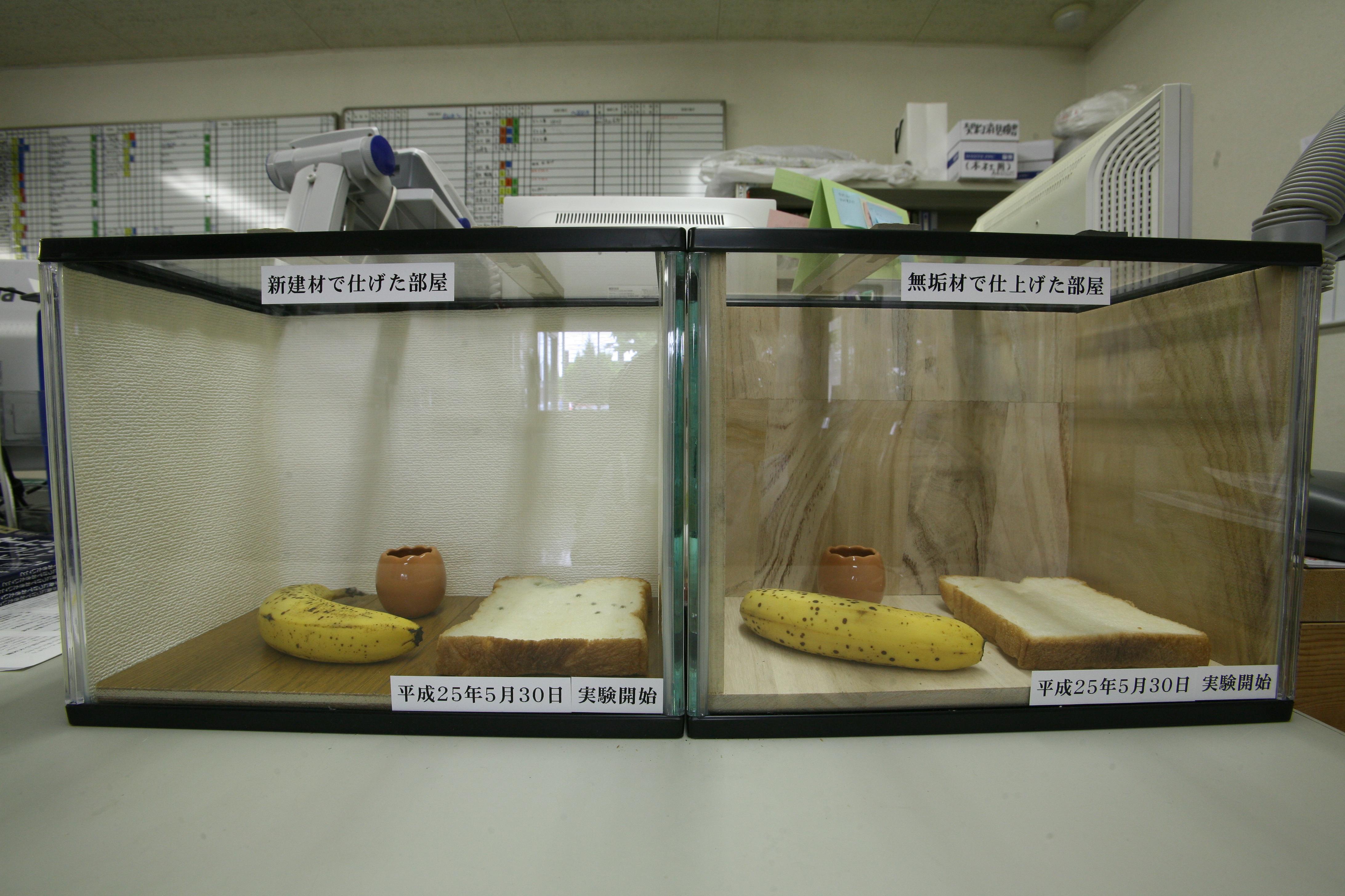 桐の抗菌作用実験8日目